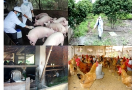 Regulations on prevention of terrestrial animal diseases